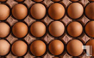 卵がぎっしり